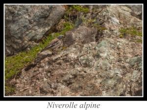 wpid-lien_niverolle-alpine.jpg