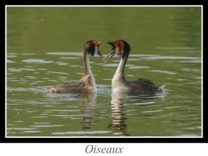 wpid4757-lien_oiseaux.jpg