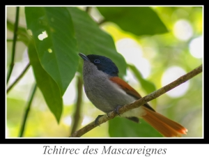 wpid5121-lien_tchitrec-des-Mascareignes.jpg