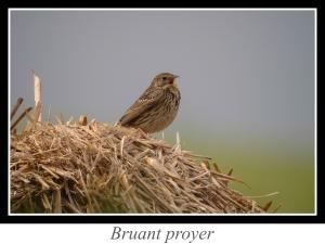 wpid5160-lien_bruant-proyer.jpg