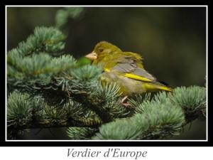 wpid5187-lien_verdier-d-europe.jpg