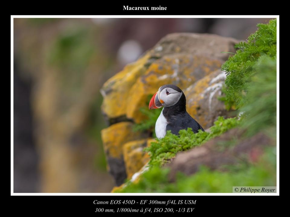 wpid5552-Macareux-moine_MG_2224_web.jpg