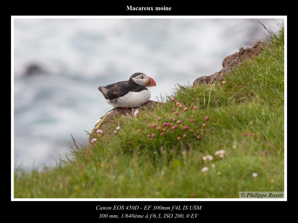 wpid5562-Macareux-moine_MG_2338_web.jpg