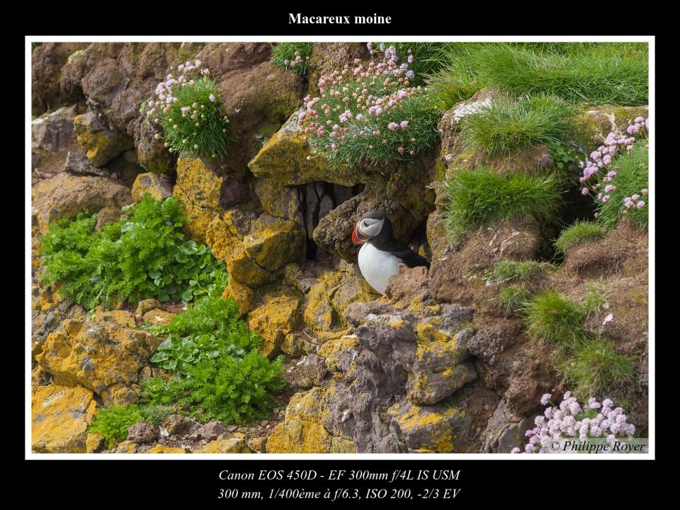 wpid5564-Macareux-moine_MG_2354_web.jpg