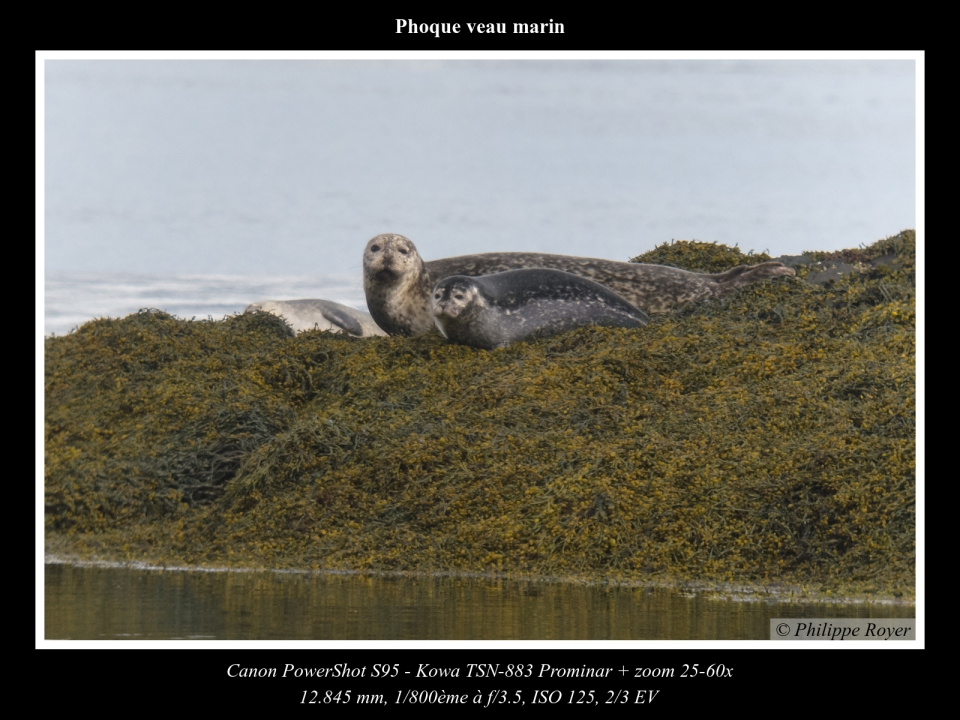 wpid5604-Phoque-veau-marin_IMG_2264_web.jpg
