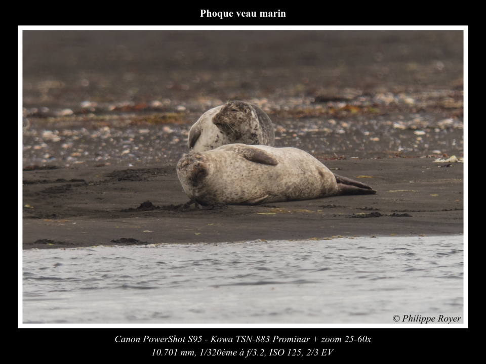 wpid5642-Phoque-veau-marin_IMG_2320_web.jpg