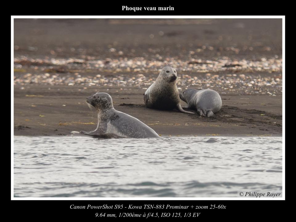 wpid5644-Phoque-veau-marin_IMG_2348_web.jpg