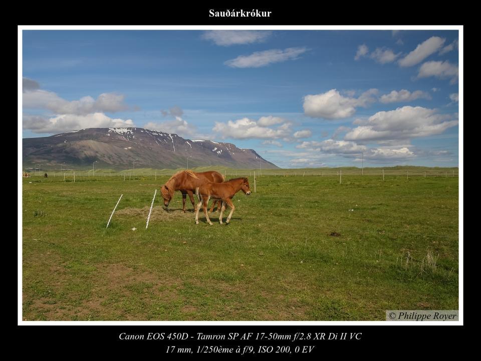 wpid5712-IslandeIMG_2630_web.jpg