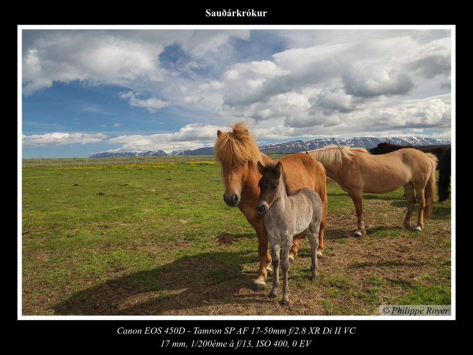 wpid5714-IslandeIMG_2638_web.jpg