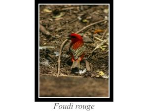 lien_foudi-rouge.jpg
