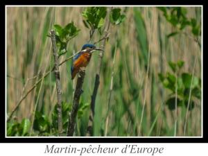 lien_martin-pecheur-d-europe.jpg