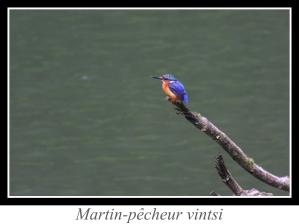 lien_martin-pecheur-vintsi.jpg