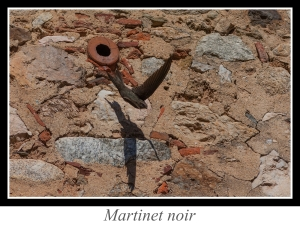 lien_martinet-noir.jpg