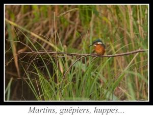 lien_martins-guepiers-huppes.jpg