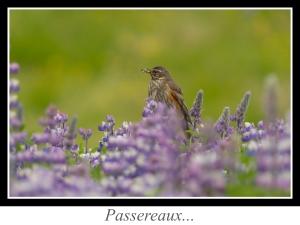 lien_passereaux.jpg