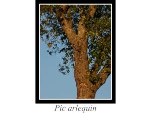 lien_pic-arlequin.jpg