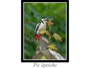 lien_pic-epeiche.jpg