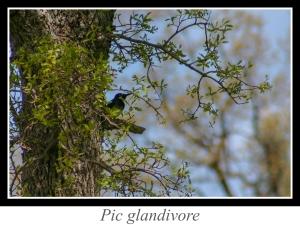 lien_pic-glandivore.jpg