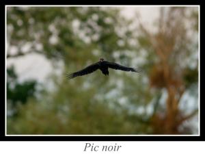 lien_pic-noir.jpg