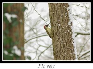 lien_pic-vert.jpg