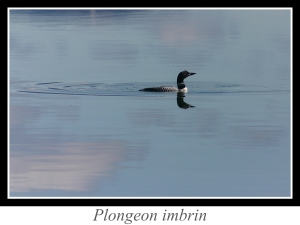 lien_plongeon-imbrin.jpg