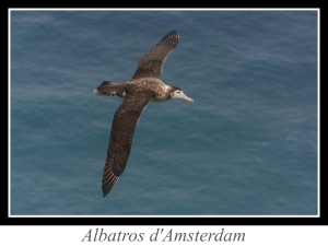 lien_albatros-d-amsterdam.jpg