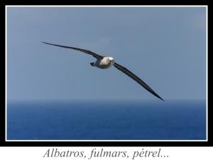 lien_albatros-fulmars-petrels.jpg