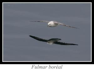 lien_fulmar-boreal.jpg